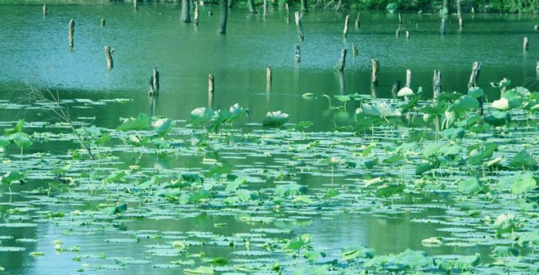 洽川风景名胜区位于陕西合阳县城东23公里处的洽川镇黄河二级台地上,东西宽3公里,南北长10公里,是全国4A级风景名胜区和中国西北地区面积最大,生物种类最多的天然保护湿地生态区。